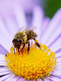 Veneno de abeja cosmetica