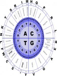 aminoácidoskk
