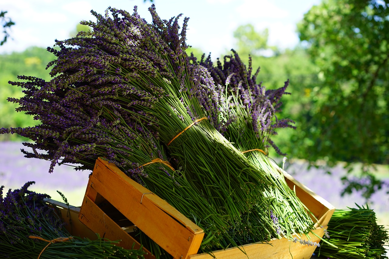 lavender-1595608_1280